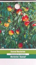 4'-5' Sunred Nectarine Tree Live Healthy Fruit Trees Plant New Best Home Garden
