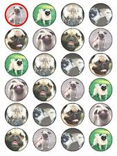 X24 PUG DOG CUP CAKE TOPPERS DECORATIONS ON EDIBLE RICE PAPER