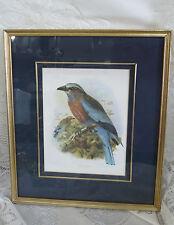 J.G. Keulemans Lithograph Burmese Roller Bird Framed Mat Hanart Imp.