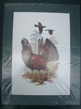 Ron Lindsay Print - CAPERCAILLIE - The Wildlife Series