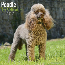 Toy Poodle and Miniature Poodle 2017 Wall Calendar by Avonside (12x24 when open)