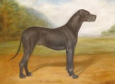 Fine Large 1910 Great Dane Blue Portrait Antique Oil Painting Dog Fred THURLBY