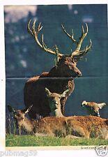 Coupure de presse 1979 (Poster) Télé 7 Jours Le Cerf et ses Biches