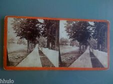 STC055 Chemin maison foret arbre à situer albumen stereoview photo STEREO