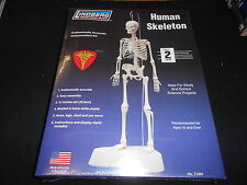 "LINDBERG SCIENCE KITS 71304 14"" HUMAN SKELETON PLASTIC MODEL KIT"