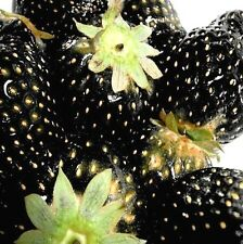FD795* Strawberry Seeds Nutritious Delicious Fruits Seed StrawberriesBlack 50PC1