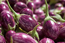 Mini Eggplant Ablong - A Delicious Purple Eggplant - 100 Seeds  From Thailand
