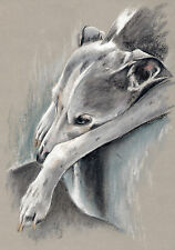WHIPPET *    Windhund  *   A4  Limited  Print  #  20