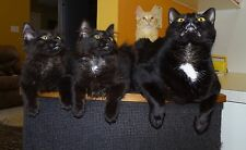 """Scoot & Newts Presents   """" Training Day """"  with Winston Tony & Genigess"""