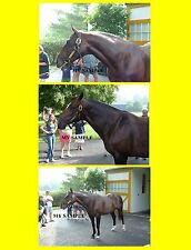 """3 Pulpit 8"""" by 10"""" Photos Former Sire at Claiborne Farm Kentucky Horse Racing"""