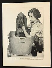 Original 1934 Dog Print / Bookplate - BLOODHOUND, Bath-Tme Woes,The Last Straw