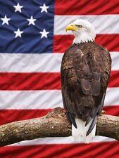 3D Poster American Eagle Amazing Lifelike Unique Images Art Home Decor