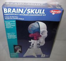 SKILCRAFT BRAIN AND SKULL MODEL KIT