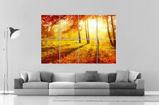 Nature Autumn Forest Trees Leaves  Wall Art Poster A0 Large print