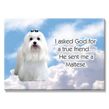 MALTESE True Friend From God FRIDGE MAGNET New DOG