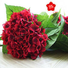 10 PCS Wine red hydrangea seeds. Beauty and fragrance of household plants