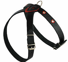 "Genuine Leather Dog Harness Studded 18""-21"" chest Boston Terrier Spaniel Poodle"