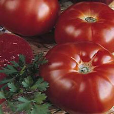 "Marmande Tomato *Heirloom* (50 Seed's) ""FREE SHIPPING"""