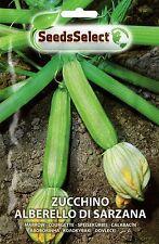 20 Semi/Seeds ZUCCHINO Alberello di Sarzana