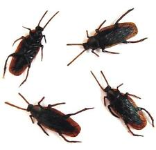 12 BULK COCKROACH BUGS fake creepy bug roach joke cockroaches insects REALISTIC