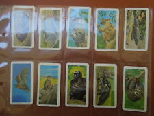 1972 Brooke Bond Tea CANADA  ANIMALS & THEIR YOUNG  baby Trading set  48 cards