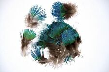 Peacock Blue Plumage feathers RARE  approx100 flytying crafts trimmings