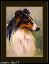 English Picture Print Scotch Collie Dog Head Study Art