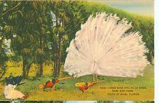 MIAMI,FLORIDA-THREE RARE SPECIES OF BIRDS-LINEN-D519-RARE BIRD FARM-(BIRDS-504)