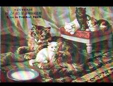 CHAT & CHATON / BELLE JARDINIERE à PARIS / illustré début 1900
