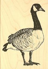 CANADIAN GOOSE Wood Mounted Rubber Stamp IMPRESSION OBSESSION E7844 NEW