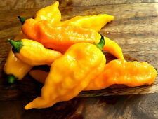BHUT JOLOKIA YELLOW pure seeds