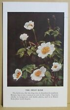 circa 50's / 60's Collectors Card - Cassell's Nature Cards Series A # 20