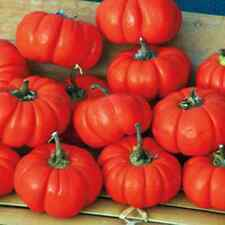 Rare Pumpkin Peppers! DRY THEM FOR CRAFTS! SEE OUR STORE! COMBINED S/H!