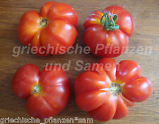 GARLIC Knoblauch Tomate 10 Seeds All Types Very Rare Tomatoes seedfast