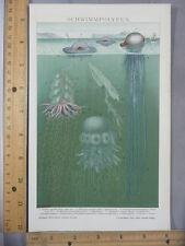 Rare Antique Original VTG Schwimmpolypen Marine Biology Life Litho Art Print
