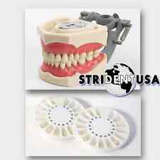 DENTAL TYPODONT OM 860 TEACHING MODEL WITH EXTRA SET OF TEETH (64 TOTAL TEETH)