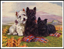 SCOTTISH AND WESTIE TERRIER THREE DOGS LOVELY IMAGE DOG PRINT POSTER