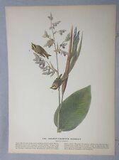 1942 Audubon #183 Golden Crowned Kinglet & #184 Black Throated Mango Lithograph