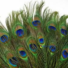 50pcs lots Real Natural Peacock Tail Eyes Feathers 8-12 Inches/about 23-30cm MT