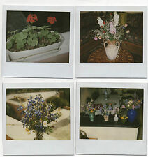Lot 4 PHOTOS - Polaroïd - Bouquet de fleurs - Plantes - Vers 1970-1980 - Vintage