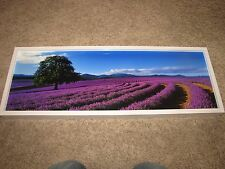 "Peter Lik ""Lavender Sea"" Original Photograph 1M 10""x29"" Signed /950 Tasmania COA"
