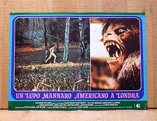 UN LUPO MANNARO AMERICANO A LONDRA fotobusta poster An American Werewolf London