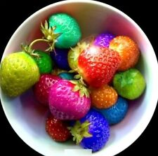 FD3683 Fruit Seeds Rainbow Strawberry Seeds Colorful Strawberry Seeds 100PCs