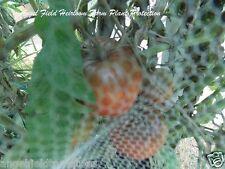Indian Zebra Heirloom Tomato  Seeds From Arkansas 10 Organic Angel Seeds