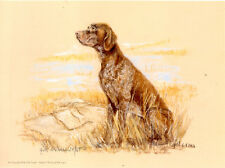 German Shorthaired Pointer Limited Edition Print by UK Artist Gill Evans