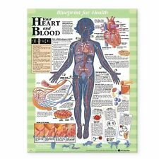 NEW Blueprint for Health Your Heart and Blood Chart by Acc Paperback Book (Engli