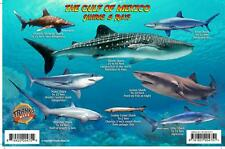 Gulf of Mexico Sharks & Rays Guide Franko Maps Laminated Fish Card