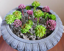 18 Miniature Artificial Succulents Plants Two Colors Grass Doll House Landscape