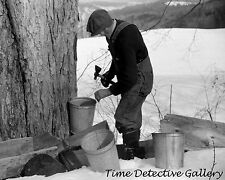 Tapping a Maple Tree to Make Syrup, N. Bridgewater, VT-1940-Historic Photo Print