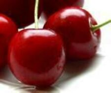 Flavor Oil 1/4 oz Cherry Lip Balm Edible Body Oils